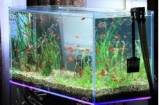 Изготовление аквариумов на заказ - до 1200 литров