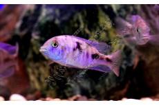 Услуги фотографа для аквариумных питомцев