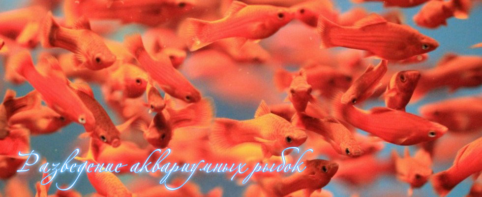 Купить аквариумные рыбки