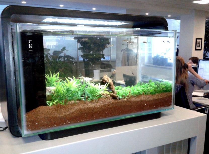 Оформление аквариумов в Москве