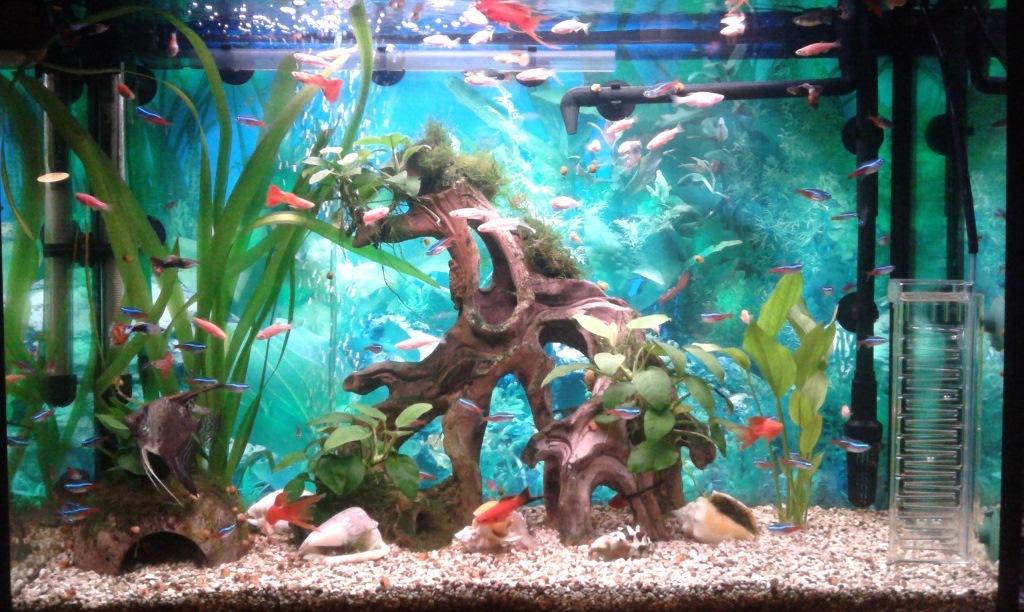 Дизайн аквариумов