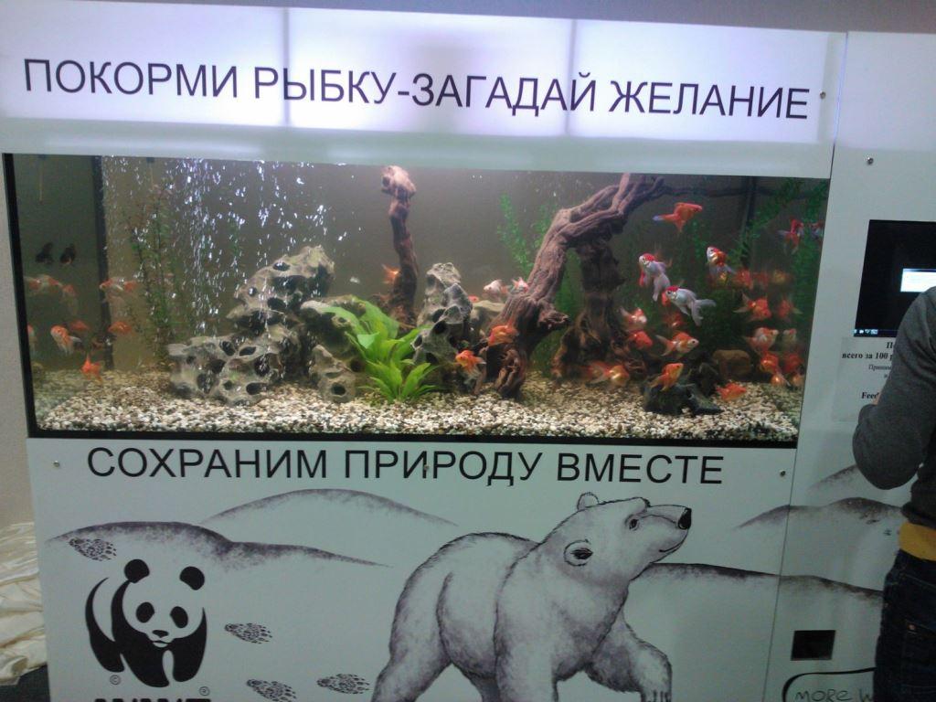 Дизайн аквариумов в Москве