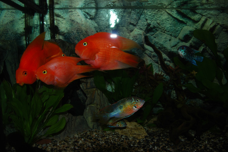 Аквариумные рыбки - аквариум