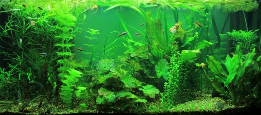 Дизайн и оформление растительного аквариума