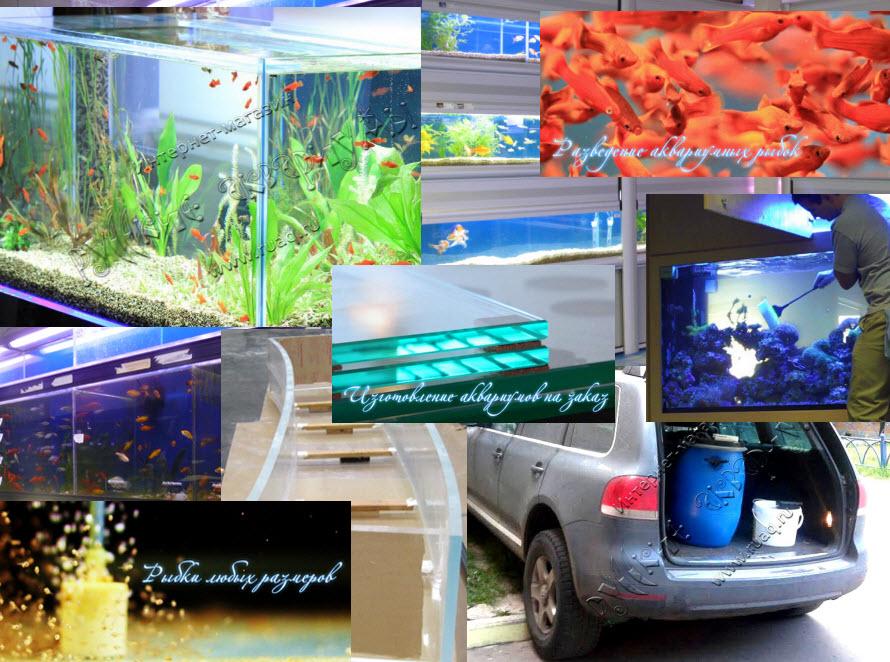 Русские аквариумы - вся аквариумистика в одном месте