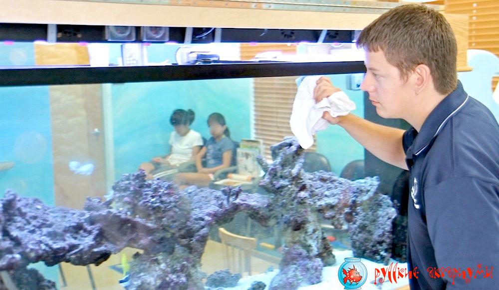 Очистка и обслуживание аквариумов в Москве и области