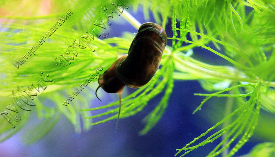 Услуги аквариумного фотографа